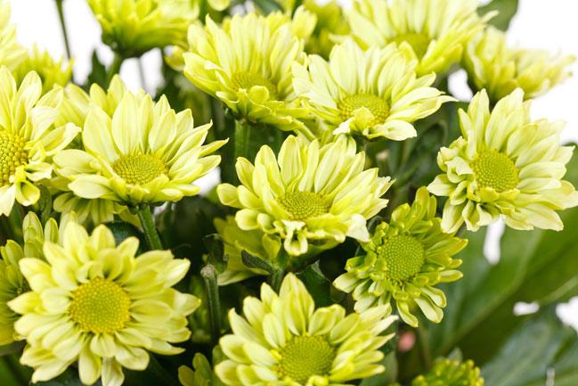 Фото и названия цветов для букета