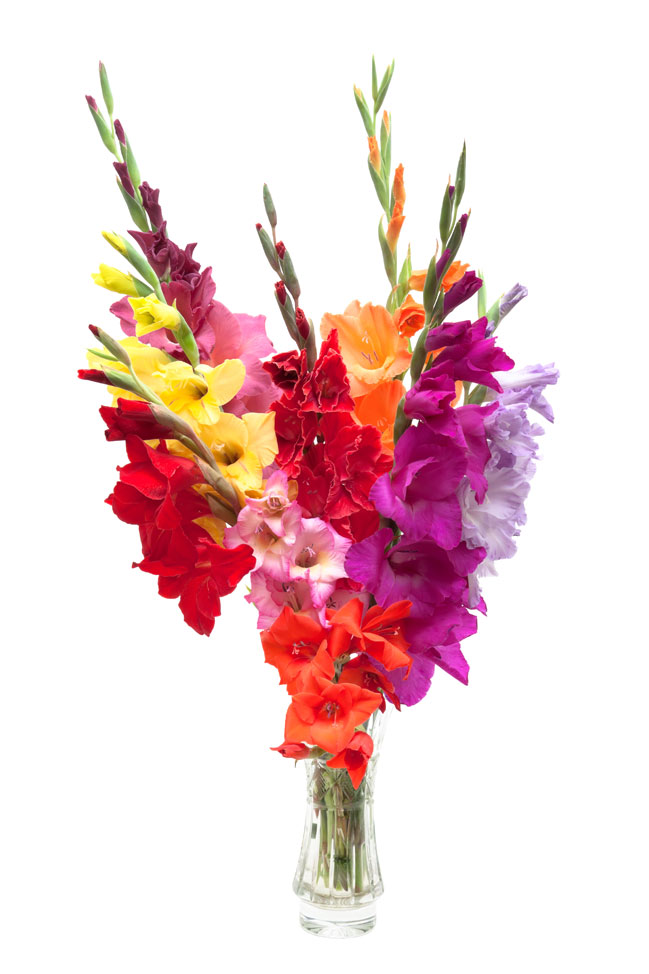http://www.floridence.ru/assets/images/Articles/gladiolus/gladiolus.jpg