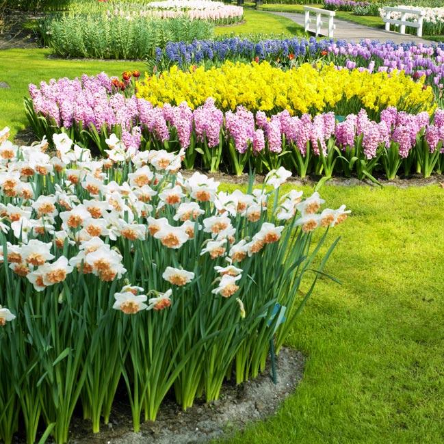 Цветочное великолепие в королевском