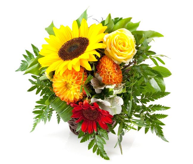 Цветы – красочный комплимент