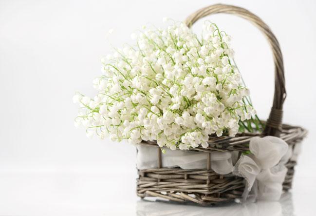 Самые красивые цветы в мире Интересные факты 27